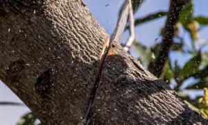 abbattimento alberi motosega