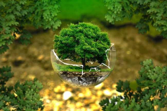 ambiente protezione albero
