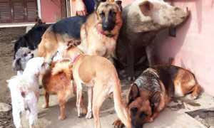 animali cani rifugio