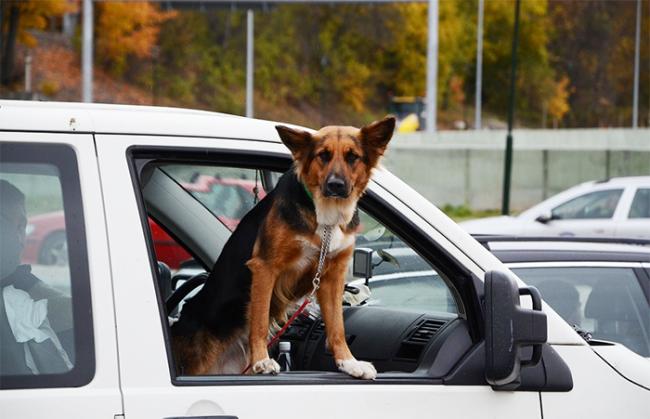 cane finestrino auto zampe