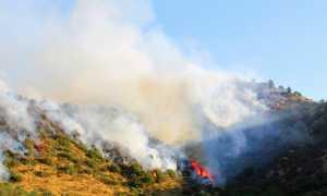 incendio bosco prato fumo
