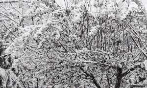 nevicata 1